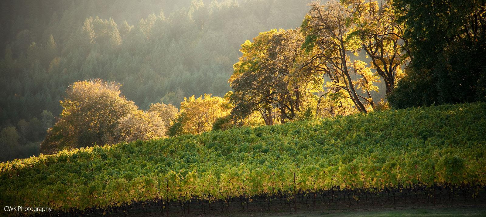 best vineyard view in Willamette Valley