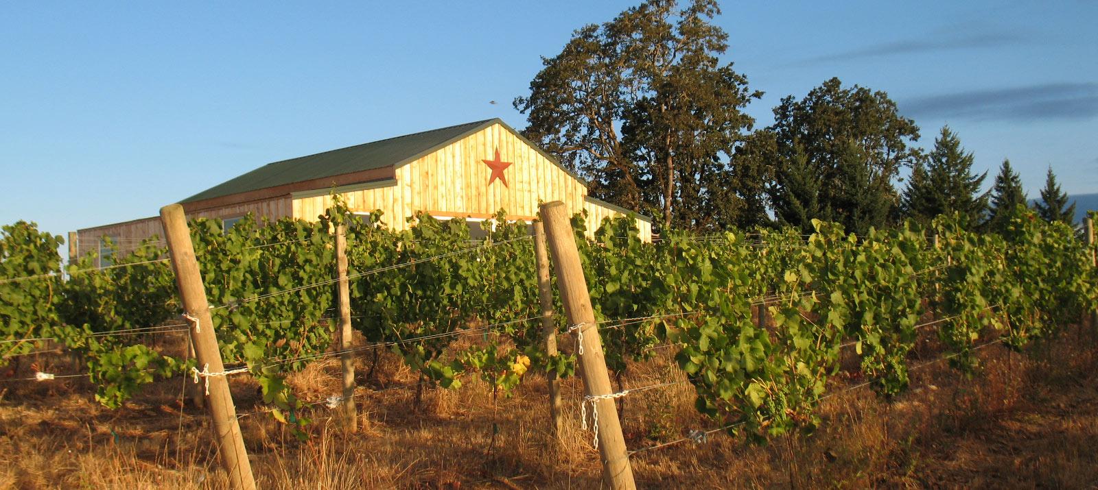 J Wrigley wines