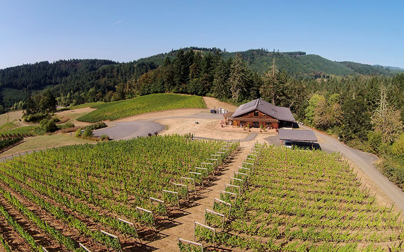 Coeur de Terre vineyard aerial