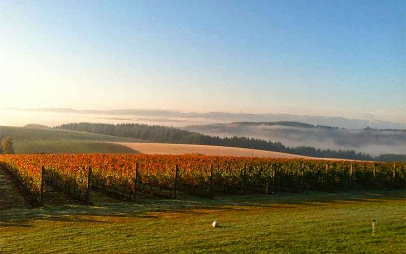 coleman vineyard