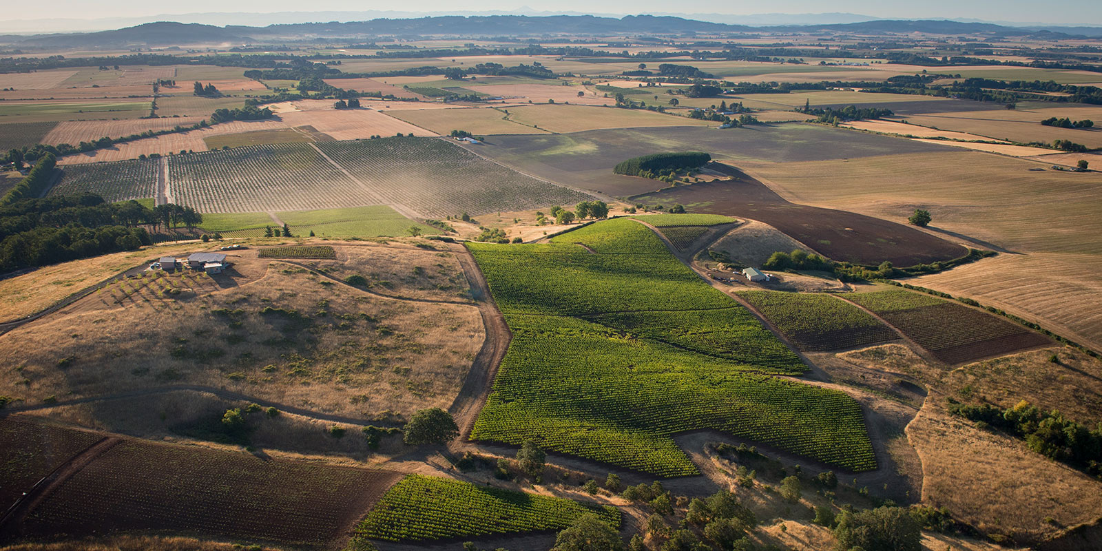 Brittan Vineyards aerial view